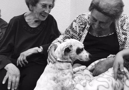 Los Girasoles - Centro de día para personas mayores